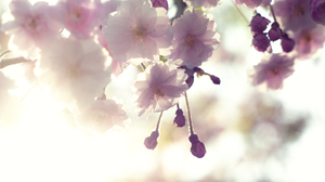 Earth Blossom 2600x1727 Wallpaper