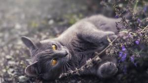 Cat Pet 6144x4096 wallpaper