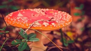 Close Up Fall Mushroom Nature 2555x1600 wallpaper