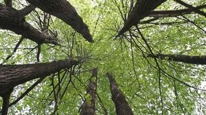Canopy Earth Greenery Tree 1920x1200 Wallpaper