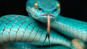 Animal Blue Snake 2048x1365 Wallpaper