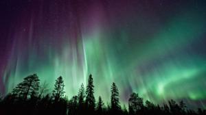 Nature Trees Forest Sky Stars Aurorae Polar Night Norway 1920x1080 Wallpaper
