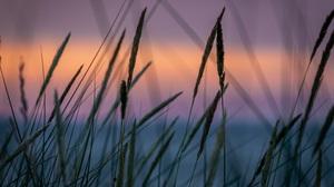 Sunset Wheat Soft Gradient Landscape Field Grass Pastel Huawei China Garden Calm Sun Rays Nature 5184x3456 Wallpaper