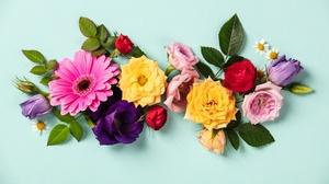Colors Flower Gerbera Leaf Rose Tulip 6000x4000 Wallpaper