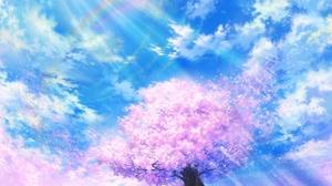 Anime Blossom Spring Sunshine 1920x1080 Wallpaper
