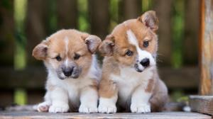 Baby Animal Depth Of Field Dog Pet Puppy 3531x2357 Wallpaper