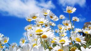 Daisy Sky White Flower 2560x1920 Wallpaper