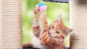 Cat Pet 2000x1349 Wallpaper