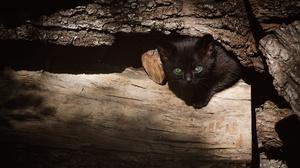 Cat Green Eyes Kitten Log 3840x2160 Wallpaper