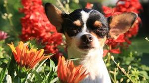 Dog Flower 2560x1600 wallpaper