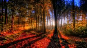 Forest Fall Nature Tree Leaf Sunbeam 2560x1440 Wallpaper