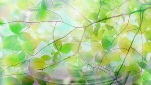 Branch Leaf Water 1600x1200 wallpaper