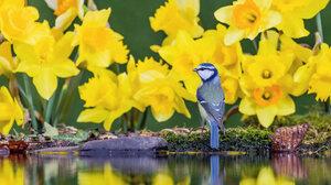 Animals Birds Nature Reflection Focused Wales UK Bing 1920x1080 Wallpaper