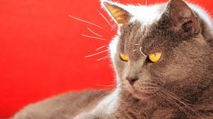 Cat Pet 2048x1536 Wallpaper