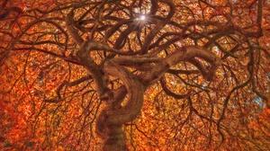 Nature Branch Fall Foliage Twisted Tree 2048x1365 Wallpaper