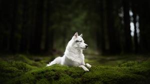 Moss Dog Pet 2048x1367 wallpaper