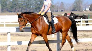 Photography Horse Riding 3340x2601 wallpaper
