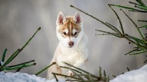 Dog Pet Baby Animal Puppy 1920x1201 Wallpaper