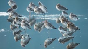 Bird Reflection Water Wildlife 2047x1300 Wallpaper