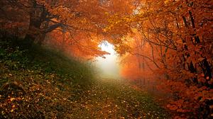 Path Forest Fall Foliage Tree 1920x1276 Wallpaper