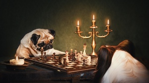Chess Pug Papillon Dog 3000x2000 Wallpaper