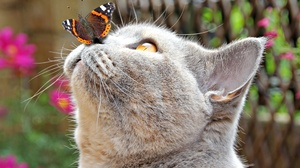 Animal Butterfly Cat Funny 3840x2160 Wallpaper