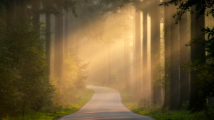 Forest Road Sunlight 5568x3712 wallpaper