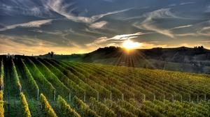 Man Made Vineyard 2560x1440 Wallpaper