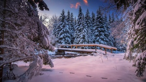 Bridge Fir Tree Snow Winter 2048x1367 wallpaper