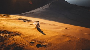 Desert Dog Dune Golden Retriever Pet Running Sand 2048x1365 Wallpaper
