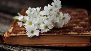 Flower 2560x1440 wallpaper