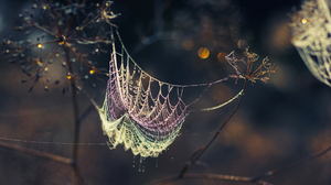 Photography Spider Web 1920x1200 Wallpaper