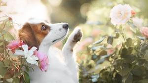 Dog Pet 2047x1365 Wallpaper