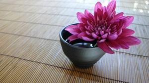 Chrysanthemum 2685x1694 Wallpaper