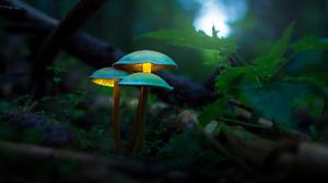 Mushroom Forest Macro Blurred Depth Of Field Glowing Photography 3840x2553 Wallpaper