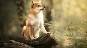 Dog Pet Baby Animal Puppy Depth Of Field 2048x1778 Wallpaper