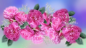 Baby 039 S Breath Pink Flower Pink Rose 1920x1080 Wallpaper