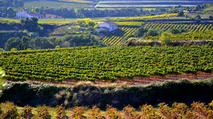 Agriculture Field House Nature Spain Vineyard 2048x1365 Wallpaper