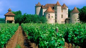 Castle Green Sky Vineyard 1600x1200 Wallpaper