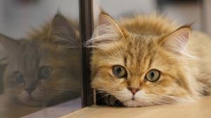 Cat Pet Reflection 2048x1361 Wallpaper
