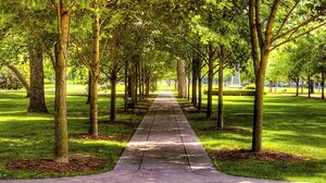 Greenery Path Tree Walkway 1920x1200 Wallpaper