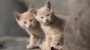 Baby Animal Cat Kitten Pet 5792x3861 Wallpaper
