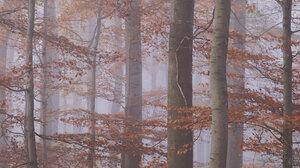 Mist Nature Landscape Fall Trees 2048x1365 wallpaper