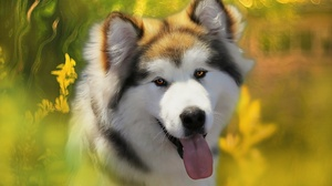 Dog 1920x1080 Wallpaper