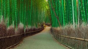 Bamboo Nature Path 1920x1080 wallpaper