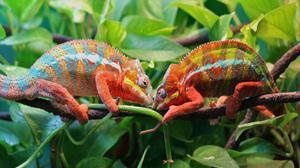 Branch Chameleon Leaf Lizard Reptile 3840x2160 Wallpaper