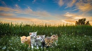 Pet Baby Animal Kitten Photoshop 2560x1600 Wallpaper