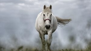 Animal Horse 5120x3200 Wallpaper
