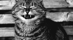 Black Amp White Cat Monochrome Pet 2560x2158 Wallpaper
