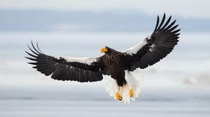 Bird Bird Of Prey Eagle Wildlife 2560x1600 wallpaper